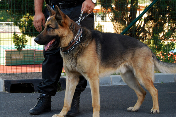 Maître chien